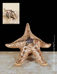Starfish Sculpture, Belgian Brown Crushed Stone, Brown Lip Seashell with Green Lip Seashell Finish